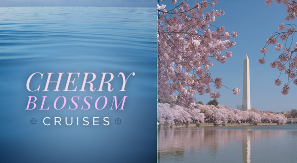 Cherry Blossom Festival Lunch Cruise